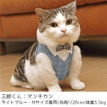マンチカン3.5kgの三郎くんはライトブルーのMサイズを着用