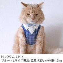 MIX4.3kgのMILOくんはLサイズのブルーを着用