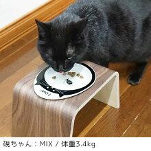 あんぐり口をあけている黒ネコが可愛い