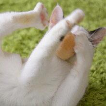 猫福袋おもちゃコロコロボールがたまらにゃい!!