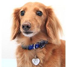 【迷子札】【犬】【猫】ダックス5.8kgの鉄之介くんはメガネを使用