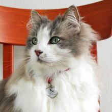 【迷子札】【犬】【猫】ノルウェージャン4.0kgのスミレちゃんはヒールを使用