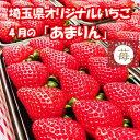 【農園直送】あまりん 4月 埼玉県オリジナルいちご 2パック 18粒〜30粒 500グラム いちご イチゴ 苺 農家直送…