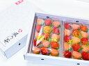 【送料無料】熊本産 雅乃苺 恋みのり 淡雪 紅白セット-250g×2 koiminori/フルーツ/フルーツギフト/贈り物/身内へのギ…