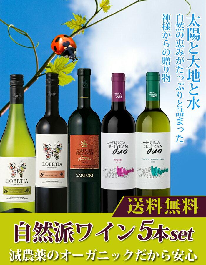 ビオワイン5本セット 赤ワイン3本白ワイン2本 オーガニック 送料無料  高品質ワイン 自然派