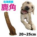 北海道産★鹿の角★20〜25cm大型犬〜中型犬用犬のおもちゃ 送料無料 誕生日プレゼントやしつけ・いたずら防止にエゾシ…
