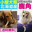 北海道産★小型犬用お試しサイズ★鹿の角 約10cm以下×1本【送料無料】犬のおもちゃ/犬のおやつ 『エゾシカの角』誕…