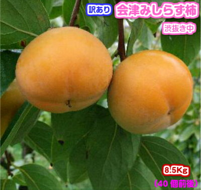 会津みしらず柿
