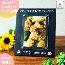 【メール便送料無料】【ペット位牌】メモリアルフォトフレーム 簡単オーダーで大切なペットのご供養を 写真立て 犬 …