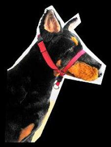 犬のしつけ 引っ張り防止 効果抜群 ジェントルリーダヘッドカラー