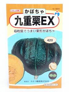 九重栗EXかぼちゃ(種:ウタネ)[かぼちゃ 南瓜 種 家庭菜園 種子] 父の日 ギフト プレゼント