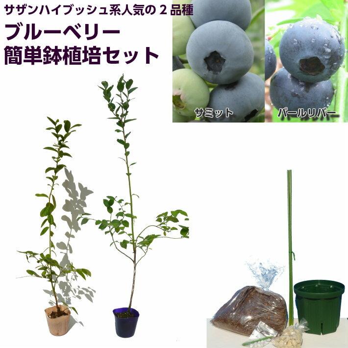 ブルーベリー 苗木 サザンハイブッシュ系人気品種2品種 簡単鉢植え栽培6点セット サミット パールリバー