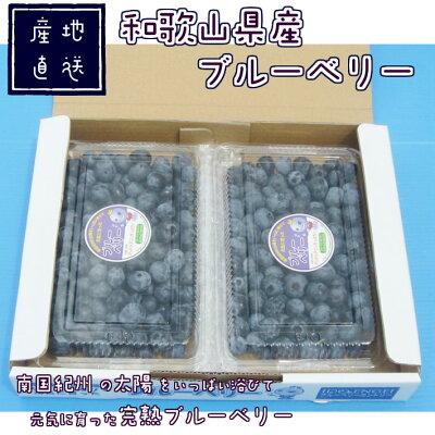 ブルーベリー完熟生果400g×2パック送料無料国産和歌山県産フレッシュブルーベリー自家栽培