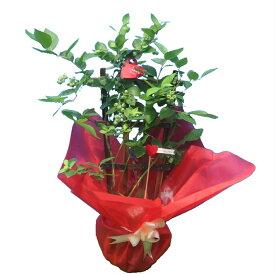 実付き ブルーベリー 5号鉢 トレリス仕立て 鉢植え 母の日 プレゼント 送料無料 鉢花 母の日ギフトフラワー 花 ギフト