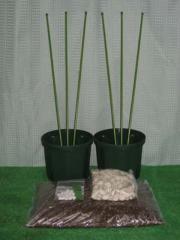 ブルーベリー簡単鉢植え栽培キット 6号鉢用6点セット 2鉢用