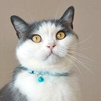 【猫】【首輪】iCatアイキャットカジュアルカラーキャンディードット。柔らかな色味のオレンジです