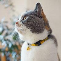 【子猫】【首輪】iCatアイキャットキティカラーツイルチェック。商品画像5。
