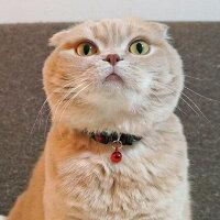 【子猫】【首輪】iCatアイキャットキティカラーツイルチェック。商品画像7。