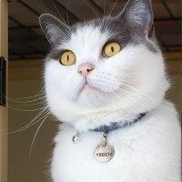 【迷子札】【犬】【猫】iDog&iCatオリジナルメタルネームタグ迷子札スターダスト。ブリショー5.2kgのゆきち君はシルバーS使用