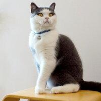 【迷子札】【犬】【猫】iDog&iCatオリジナルメタルネームタグ迷子札スターダスト。シンプルでオシャレです。