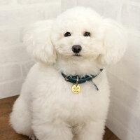 【迷子札】【犬】【猫】iDog&iCatオリジナルメタルネームタグ迷子札白プードル。オシャレに迷子防止できますよ♪