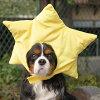 承担iDog化装东西裸体明星眼睛狗