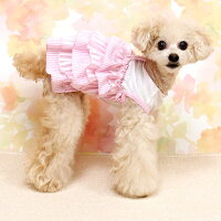 トイプー2.3kgのミミちゃんはピンクのSを着用
