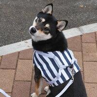 柴犬8.3kgの凪ちゃんはネイビーXXLを着用
