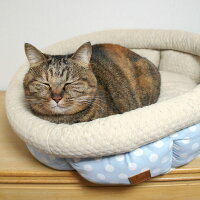 MIX3.6kgのごまちゃん、ベッドに入った途端うとうと