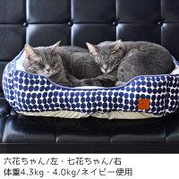 2匹仲良く同じ寝相でおやすみなさい