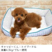 小型犬には広々サイズ