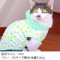 MIX3.0kgの百花ちゃんはブルーのDSを着用