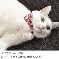 MIX4.0kgのえのきちゃんはレッドを着用
