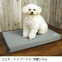 小型犬にちょうどよいサイズです