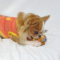 小型犬も遊びやすいサイズ感