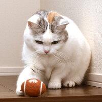 ボールが気になる様子