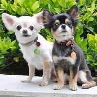 【迷子札】【犬】【猫】兄弟でお揃いにしても可愛いです
