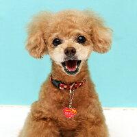 【迷子札】【犬】【猫】トイプードル2.3kgのメロディちゃんはレッドを使用