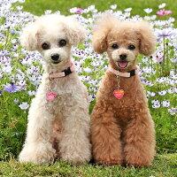 【迷子札】【犬】【猫】姉妹で色違いにしても可愛いです