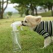 【犬】【猫】【消臭】iDog&iCatDEODEOデオデオ400ml。商品画像1。