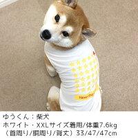 柴犬7.6kgのゆう君はホワイトのXXLを着用