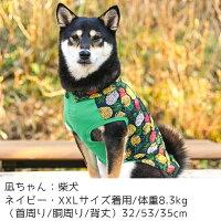 柴犬8.3kgの凪ちゃんはネイビーのXXLを着用
