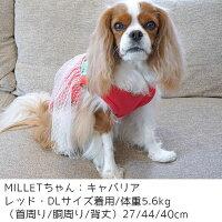キャバリア5.6kg(首27/胴44/丈40cm)のMILLETちゃんはレッドのDLを着用