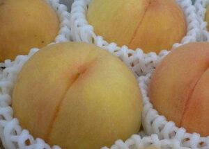 【福島の桃 地域限定品 『黄金桃』 約2.5kg(8〜10個)×3箱】