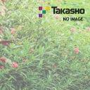Takasho all