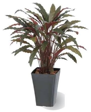 タカショー 観葉植物・グリーンデコ鉢付 カラテアR レッド GD-164R お洒落でリアル