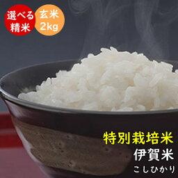 楽天市場 配送方法でさがす 送料無料 宅配便送料無料 お米と自然食品 富永米穀店