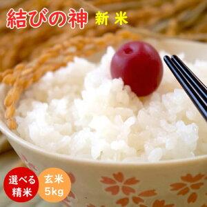 令和3年産 新米 結びの神 玄米5kg 送料無料 米ぬか無料 精米無料 三重県産三重23号 白米 無洗米 3分づき 5分づき 7分づき 胚芽米 むすびのかみ 米 5kg