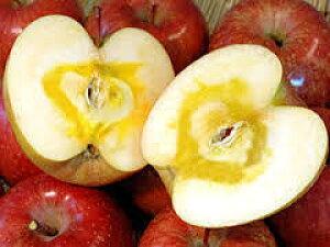 りんご5kg リンゴ 山形県産サンふじりんご 極上贈答用 東北関東送料無料 お歳暮 贈答用 迅速発送