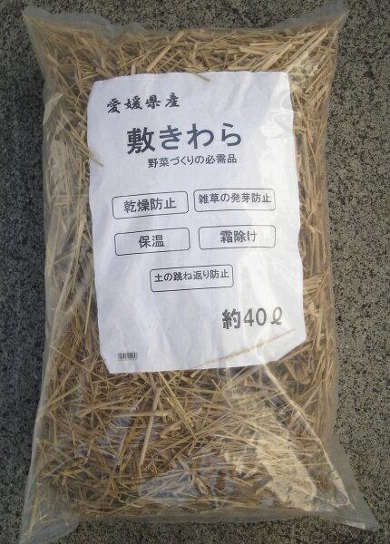 安心愛媛産カット敷きわら大容量 約40L【霜防止】【乾燥防止】【病気予防】